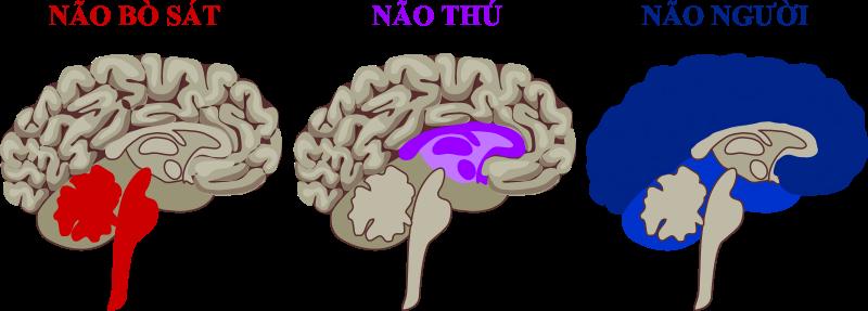 Não 3 trong 1